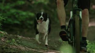 mountain-biking-with-dog