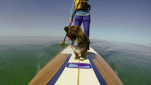 paddle-boarding-with-dog