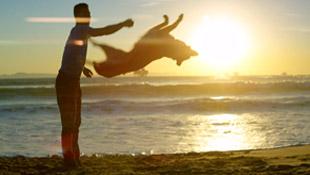 Jumpy_the_Amazing_trick_Dog
